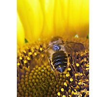The Bee Buffet  Photographic Print