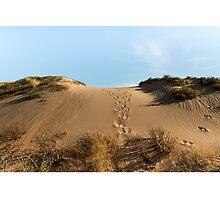 Chasing Kangaroos Photographic Print