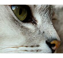 Cats Eyes (2) Photographic Print
