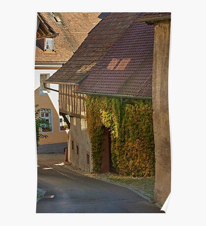 Burkheim, Kaiserstuhl - sunlight detail on vines Poster