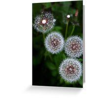 Dandelion clocks Greeting Card