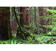 Cathedral of Giants Photographic Print