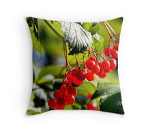 Niibing Giizis Photography Studio Throw Pillow