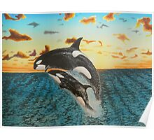 Orcas in seascape sunset Poster