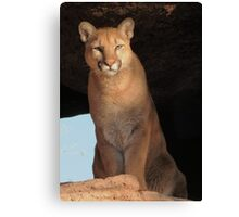 Mountain Lion Cub ~ Cruz Canvas Print