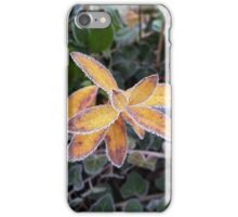 lace of ice iPhone Case/Skin