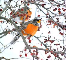 Robin in Winter #4 by Laurie Minor