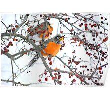 Robin in Winter #4 Poster