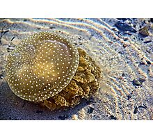 White Spotted Jelly Fish Photographic Print