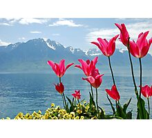 Tulips on the lakeside Photographic Print