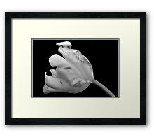 Monochrome Parrot Tulip. Framed Print