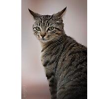 Cat suspicion Photographic Print