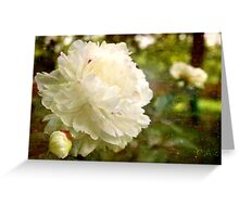 Renew your Soul  Greeting Card