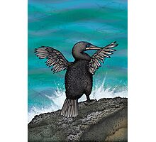 Flightless Cormorant of Galapagos Photographic Print