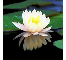 Lovely Waterlily Photographic Print