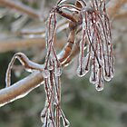 Silver Maple Tassels Enshrouded in Ice by TrendleEllwood