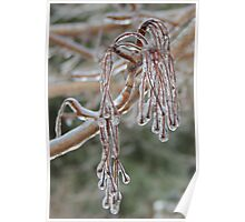 Silver Maple Tassels Enshrouded in Ice Poster