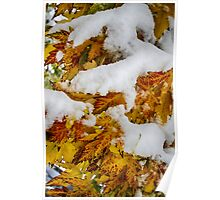 Red Autumn Maple Leaves With Fresh Fallen Snow Poster