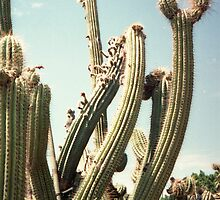 Cactus by Bel Val