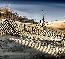 Dune Fences  by Terry  Pellmar