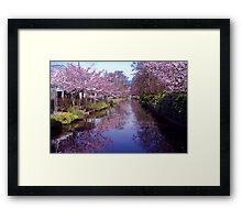 Blossoms in the Keukenhof Framed Print