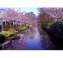 Blossoms in the Keukenhof Photographic Print