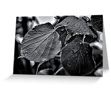 Raindrops After The Storm Greeting Card