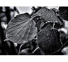 Raindrops After The Storm Photographic Print