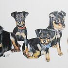 Miniature Pinscher Puppies by BarbBarcikKeith