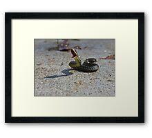 Snake Attack Framed Print