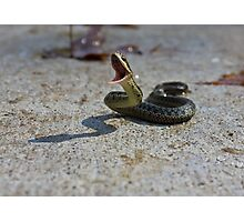 Snake Attack Photographic Print