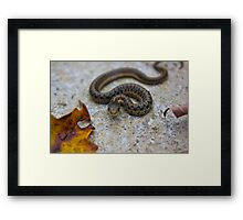 Watching Every Move You Make Framed Print