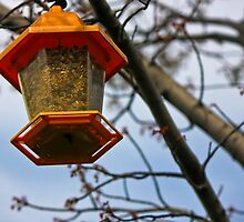 Spring Time Bird Feeder by chelseysue