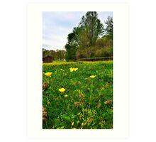Buttercup field Art Print