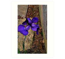 Vibrant flower Art Print