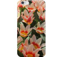 Orange, white and yellow tulip. iPhone Case/Skin