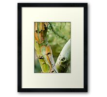 Two Roads Diverged Framed Print