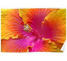 Flower - Hibiscus Rosa-Sinesis - Chinese Hibiscus - Appreciation Poster