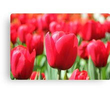 Not just roses are red. Canvas Print