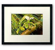 Flower - Orchid - Paphiopedilum insigne Framed Print