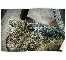 Sweet resting reptile Poster