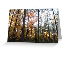 Light in the forest. Greeting Card