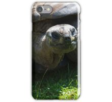 Old lady turtle eating iPhone Case/Skin