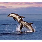 Dolphins on a Mission by Yanni