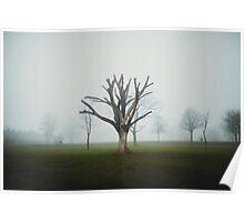 Dead Tree in Fog  Poster