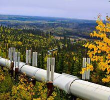 Alaska pipeline wilderness by raymona pooler