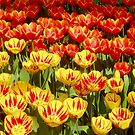 Florist, do you have something in red and yellow? by Arie Koene