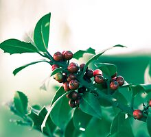 Holly bush with red berries by VanGalt