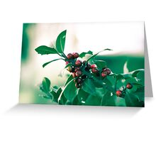 Holly bush with red berries Greeting Card