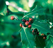 Holly bush with red berries II by VanGalt